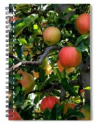 Apple Harvest - Digital Painting Spiral Notebook