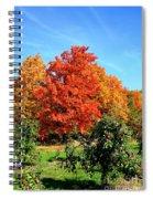 Apple Tree In September Spiral Notebook