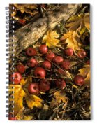 Apples In Fall Spiral Notebook