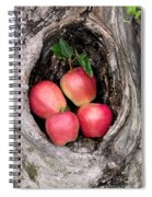 Apples In Tree Spiral Notebook