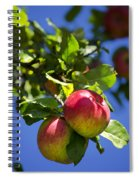 Apples On Tree Spiral Notebook
