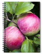 2 Apples On Tree Spiral Notebook