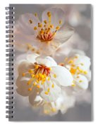 Apricot Blooms Spiral Notebook