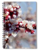 Apricot Blossoms Popping Spiral Notebook