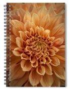 Apricot Dahlia Spiral Notebook