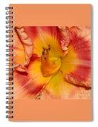 Apricot Daylily Close-up Spiral Notebook