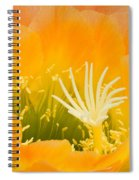 Apricot Glow Spiral Notebook