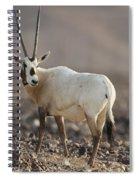 Arabian Oryx Oryx Leucoryx Spiral Notebook