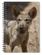 Arabian Wolf Canis Lupus Arabs Spiral Notebook