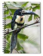 Aracari Spiral Notebook