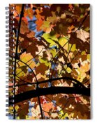 Arboretum Fall Spiral Notebook