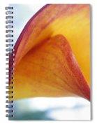 Archimedes Inspiration Spiral Notebook