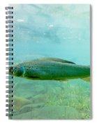 Arctic Grayling Or Thymallus Arcticus Underwater Spiral Notebook