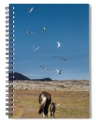 Arctic Terns With Mare And Foal Spiral Notebook