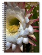 Argentine Giant Cactus Spiral Notebook