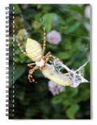 Argiope Spider Top Side Horizontal Spiral Notebook