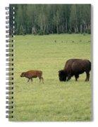 Arizona Bison Spiral Notebook