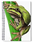 Arizona Tree Frog Spiral Notebook