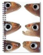 Arrangement Of Small Fish Smelt Spiral Notebook