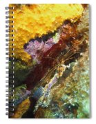 Arrow Crab In A Rainbow Of Coral Spiral Notebook