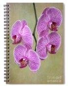 Artsy Phalaenopsis Orchids Spiral Notebook