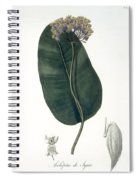 Asclepias Syriaca From Phytographie Spiral Notebook