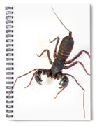 Asian Whipscorpion Spiral Notebook