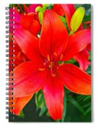 Asiatic Hybrid Lily Spiral Notebook