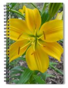 Asiatic Lily 2 Spiral Notebook