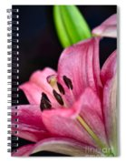 Asiatic Lily Spiral Notebook