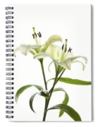 Asiatic Lily Flowers Against White Spiral Notebook