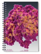 Aspartate Transaminase, Molecular Model Spiral Notebook