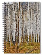 Aspen And Ferns Spiral Notebook