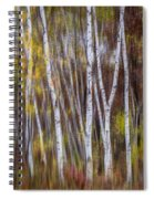 Birch Trees At Lake Maria State Park Minnesota Spiral Notebook