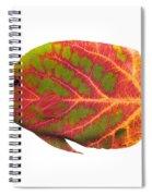 Aspen Leaf Tropical Fish 1 Spiral Notebook