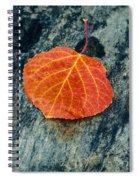 Aspen Leaf  Spiral Notebook