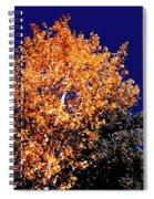 Aspen Tree Spiral Notebook