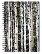 Aspen Tree Trunks Spiral Notebook