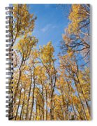 Aspen Trees In The Fall Spiral Notebook