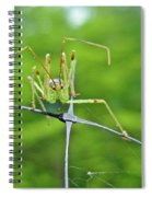 Assassin Bug Nymph - Reduviidae Spiral Notebook