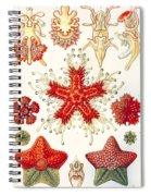 Asteridea Spiral Notebook