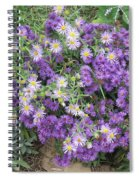 Asters Light And Dark Spiral Notebook