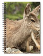At Rest In The Rockies Spiral Notebook