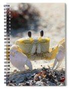 Atlantic Ghost Crab 2760 Spiral Notebook