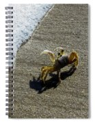 Atlantic Ghost Crab Spiral Notebook