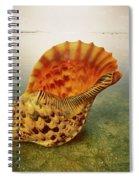 Atlantic Trumpet Triton Shell Spiral Notebook