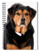 Attentive Labrador Dog Spiral Notebook