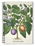 Aubergine Melanzana Fructu Pallido Spiral Notebook
