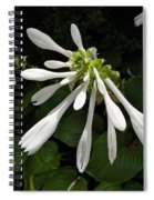 August Lily Spiral Notebook