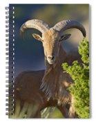 Auodad Ram On Watch Spiral Notebook